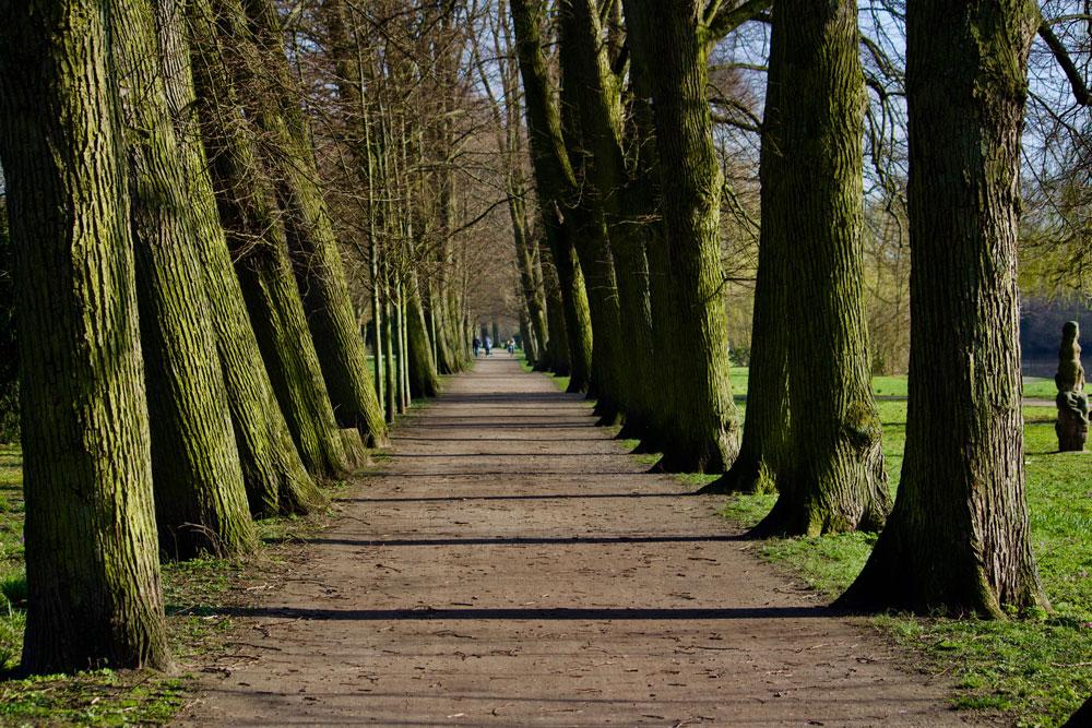 Die Wallanlagen in Gardelegen bieten einen sehr schönen Bestand an Bäumen.