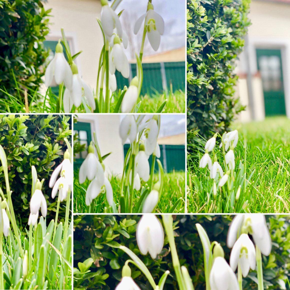 Frühlingsgrüsse aus dem Pottkuchen